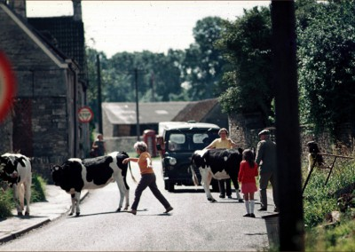 The day the cows escaped